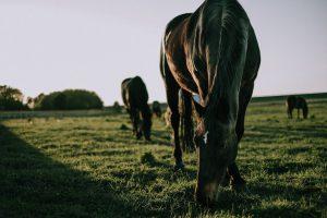 konie-na-pastwikach