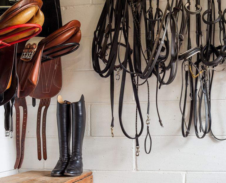 Konie na sprzedaż – dylematy kupującego