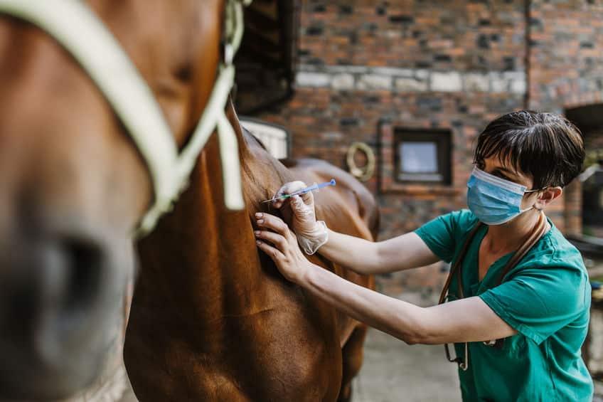 koszty-lecznia-konia