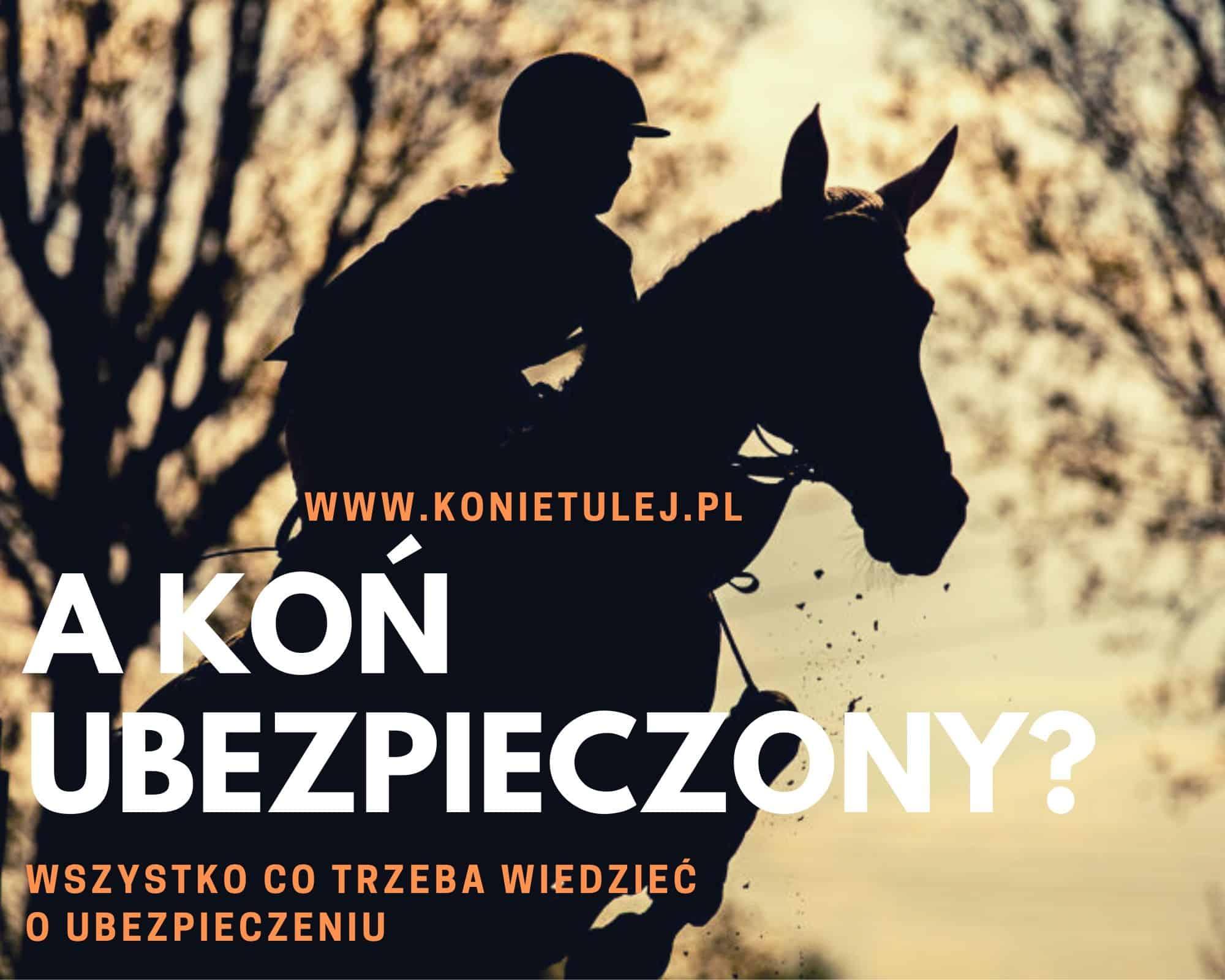 Ubezpieczenie konia sportowego. Czy warto ubezpieczać konia?