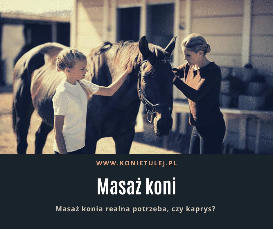 Masaż koni – potrzeba, czy kaprys?