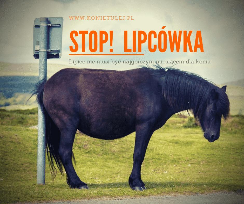 Lipcówka u koni – objawy i leczenie