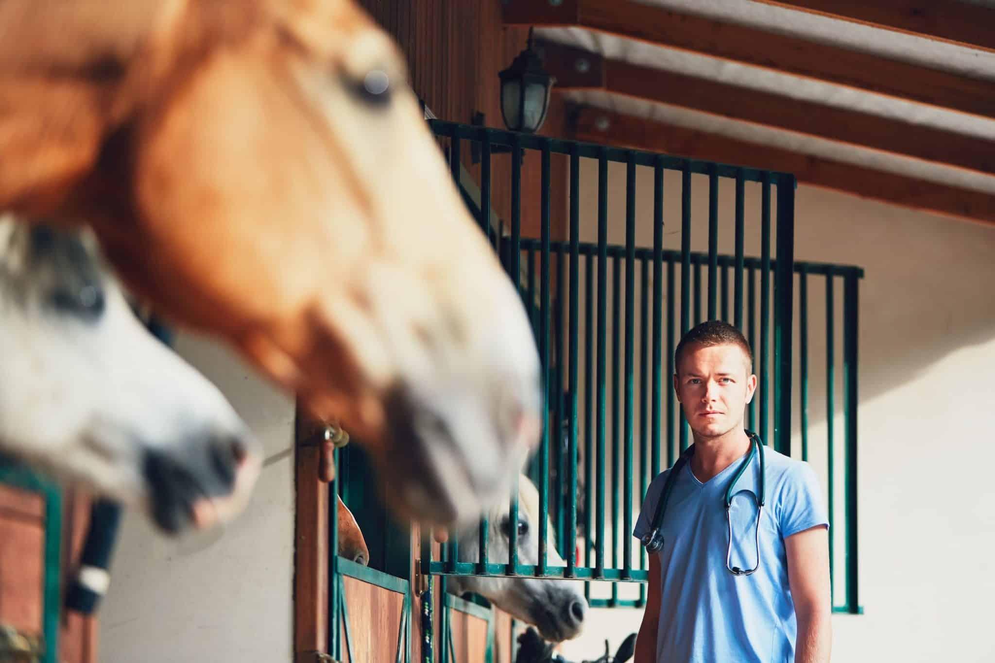 diagnostyka-zapiaszcznia-konia