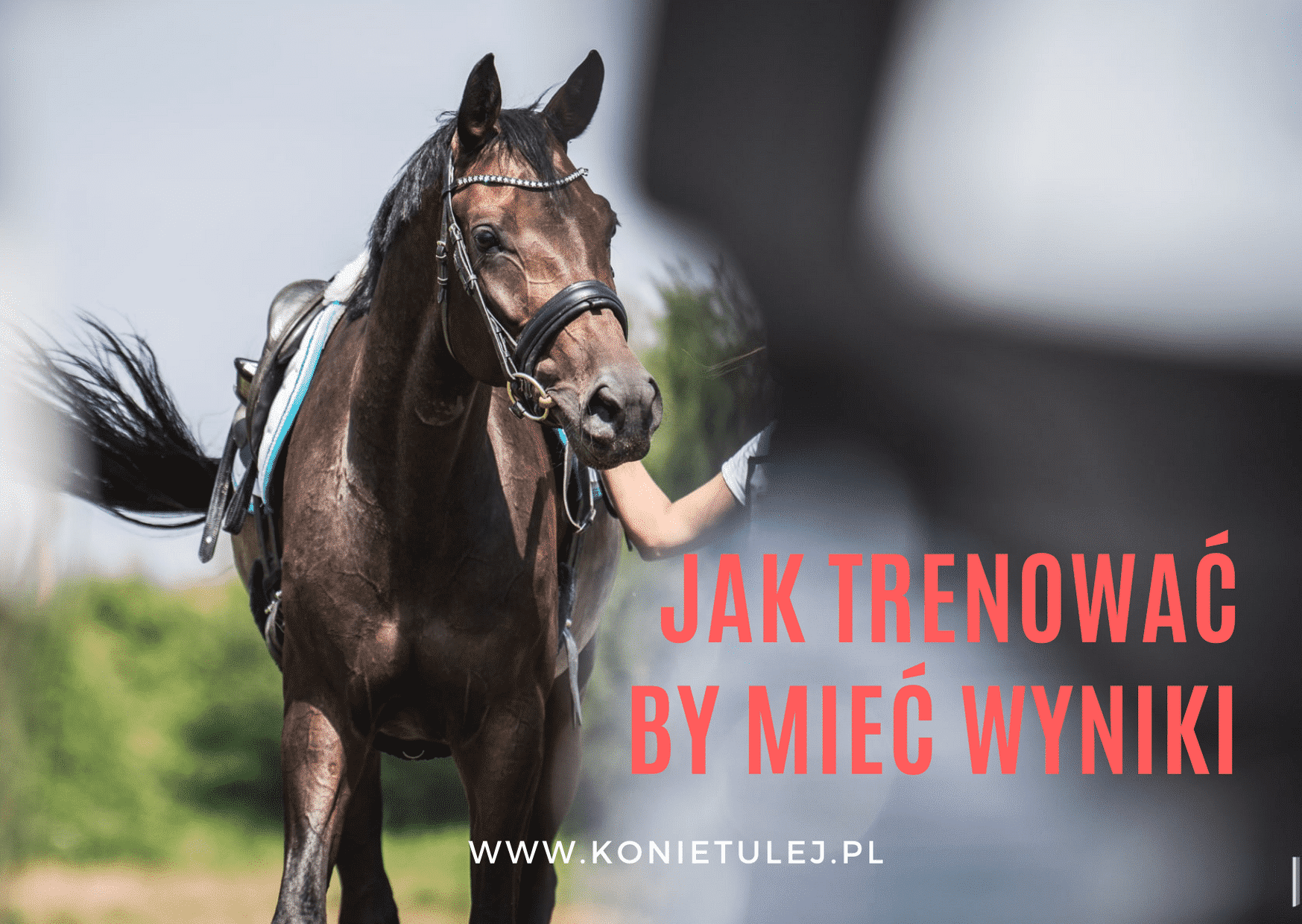 Trening konia sportowego
