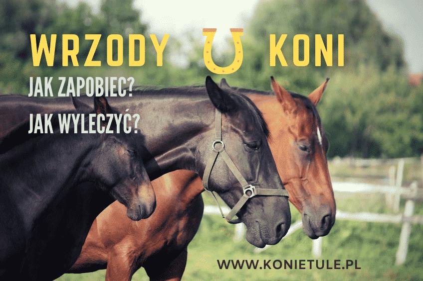 Wrzody u konia – jak rozpoznać i leczyć