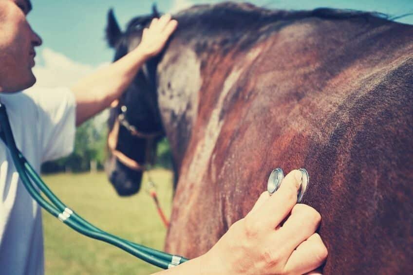 badanie-wet-wrzodow-konia