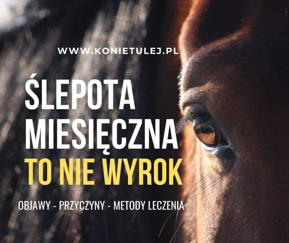 Read more about the article Ślepota miesięczna – objawy, podłoże i skuteczne leczenie